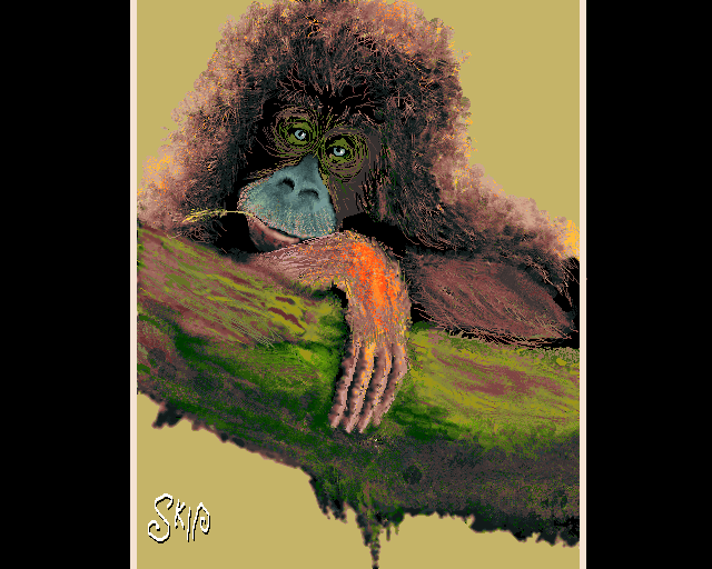 Maupa by Skip